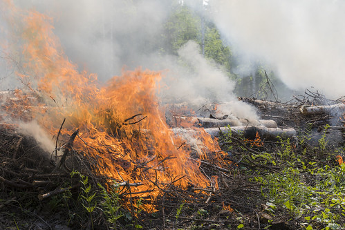 Telkkämäki slash-and-Burn