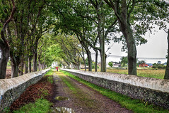 Camino con árboles (ccc.39) Tags: asturias coaña mohías camino árboles alameda path trees