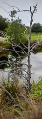 Tree over pond (cizauskas) Tags: tree pond park citypark orlando florida panorama canon canonfd legacylens manualfocus fotodiox bokeh