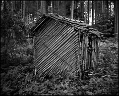 knusper knusper häuschen (jo.sa.) Tags: pm67 hütte wald tri x400 mittelformat schwarzweiss analogefotografie bw