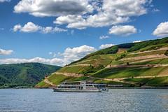Licht und Schatten im Rheintal bei Bingen (J.Weyerhäuser) Tags: bingen rheinufer schiff weinberge