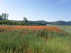 Mohnblüte mit Göttweig (naurithron) Tags: jahreszeit sommer sport furthbeigöttweig loweraustria austria