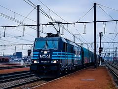 LINΞΛS 186 293 met shimmns @ Hasselt (Avinash Chotkan) Tags: lineas yourfreightforce bombardier traxx br186 shimmns trains cargo belgium 186293