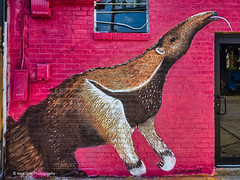 The Anteater (Kool Cats Photography over 12 Million Views) Tags: animal abstract abstractart art backalley coupe fineart graffitti grafitti graphicarts luminar mural oklahoma outdoor painting photographicart photography ricohgrii scene signs streetart streetphotography textures wallart wall