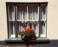 172/365: a burst out of the monochrome (Fille.de.Lumière) Tags: window red windowsill coloursoftheworld colour grey shadesofgrey redandmonochrome
