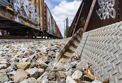 (o texano) Tags: houston texas graffiti trains freights bench benching feather raptor