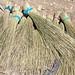 Brooms in Harar