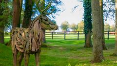 National Stud & Japanese Garden, Kildare., Ireland. (Stephen Dingley) Tags: kildare ireland national stud eire deer wood sculpture