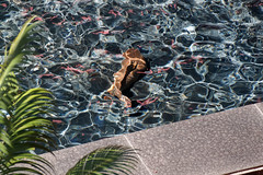 Siam Mall, Costa Adeje, Tenerife, Canary Islands (wildhareuk) Tags: abstract canaryislands canon canoneos500d fish fountain shoppingcentre siampark spain tamron18270mm tenerife tenerife2019 water pottery tamron img9435dxo