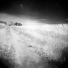 The House at the End of the Drive (Comtesse DeSpair) Tags: efke ir820 infrared abandoned farmhouse diafine holga 120n