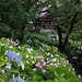 Temple bell over a sea of hydrangeas
