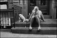 Elliott Erwitt (madison.jelloe.2022) Tags: americas amériquedunord anger animal animaldomestique artscultureandentertainment assis astonishment black bulldog candidphotography chien colère compositioninsolite couleurgris day dog door escalier etonnement extérieur exterior féminin fulllength globalholidays grey humour iconicpicture leash lifestyleandleisure mammal mammifère manallages marchesextérieur masculin matchingpair midadult newyork newyorkcity newyorkcityall newyorkcityentier nofaces northamerica oneperson paire pavement pet porte processed qualitycontrolrequired rhymevisual rime rue scenic seated staircase stepsoutsidebuilding stoop street thematicpictures travelpictures trottoir trust unitedstates unitedstatesofamerica unrecognisable unusualcomposition urbanscene white womanallages worldwide youngadult