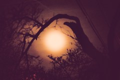 Supermoon & Tree (Dims Dallaire) Tags: supermoon tree night moon lunar