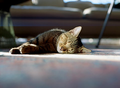 cat (bluebird87) Tags: cat mamiya film dx0 epson v600 kodak ektar m645