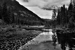 Mountainside, Blue Skies and Clouds Caught in Lake Water Reflections (Black & White, North Cascades National Park Service Complex) (thor_mark ) Tags: azimuth97 blackwhite bluesskieswithclouds capturenx2edited cascaderange cloudreflections cloudreflectionsonwater colorefexpro coonlake day5 evergreentrees evergreens glasslikereflections hiketohowardlake hillsideoftrees howardlake lake lakechelannationalrecreationarea lakereflectionsonwater landscape lookingeast mcgregormountain methowmountains mountains mountainsindistance mountainsoffindistance mountainside nature nikond800e northcascades northcascadesnationalparkcomplex northcascadesnationalparkservicecomplex northmethowmountains outside pacificcresttrail pacificranges partlycloudy portfolio project365 rainbowmountain reflections reflectionsonlake reflectionsonpond reflectionsonwater rollinghillsides sunny talltrees trees triptonorthcascadesandwashington waterlilies waterreflections waterreflectionsofmountains lakechelannationalrecreation washington unitedstates