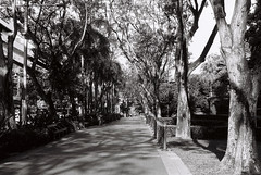 Garden City, Singapore (Thanathip Moolvong) Tags: olympus om1 rollei rpx 100 bw film