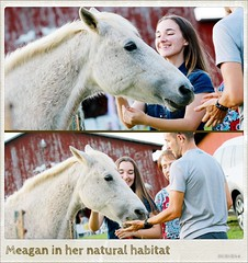 Made an instant friend today; her name is Bunny (Lee Bennett) Tags: animal horse ranch farm barn mdg day172 365daysofhappy