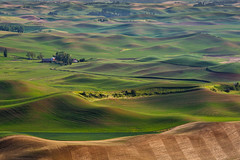 Springtime in the Palouse (trochford) Tags: fields countryside hills rolling farm barn redbarn spring green ocher wheat furrows evening scenic landscape steptoebutte palouse washington inlandnorthwest us usa unitedstates canon canon6d ef70200mmf4lisusm ef70200 ef14xiiiextender