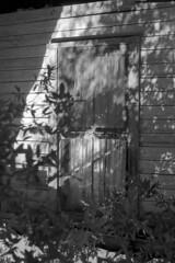 Old Glass (macromary) Tags: analog florida foma fomapan fomapan100 blackwhite analogphotograph bw blackandwhitefilm filmcamera film mechanicalcamera vintage vintagecamera rodinal 35mm nikkor 50mm 50mmlens 35mmfilm f14 nikonf100 f100 nikon putnamcounty monotone southern urbex rurex flurbex abandoned derelict window netcurtain