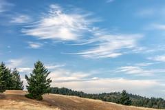 Cirrus Sky (Kirk Lougheed) Tags: california marincounty mounttam mounttamalpais mounttamalpaisstatepark mttam mttamalpais tamalpais usa unitedstates cirrus cloud clouds landscape outdoor sky