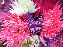 Summer's Burst Of Colour (bigbrowneyez) Tags: flowers gorgeous beautiful petals fiori belli delightful fleurs fabulous striking bouquet bellissimi stunning nature natura summersburstofcolour 1stdayofsummerjune21 exquisite amazing elegant fresh macro purplepinkwhite fullscreen uplifting sweet dolce