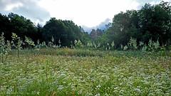 CEDAR RIDGE PRESERVE 5 (k.nanney) Tags: field meadow wildflowermeadow joepoollake cedarridgepreserve audubonpreserve dallascounty dallas texas nikon d750 afsnikkor20mmf18g nikon20mm 20mm kennethnanney kennanney nanney
