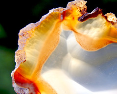 Geode (Dave Redman pics) Tags: geode stone rock geology earth nature beautiful cutstone beauty rockhunting mineral gemstone gem orange white translucent opaque