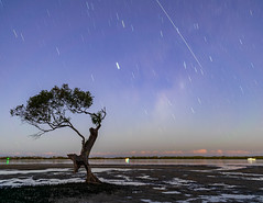 DSC_7051 (harrystrangerphotography) Tags: iss astrophotography tree stars australia sunset milky way