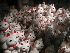 招き猫、東京 Lucky Cat, Tokyo (runslikethewind83) Tags: travel japan cat japanese tokyo asia culture explore luck lucky nippon neko manekineko japon nihon اليابان