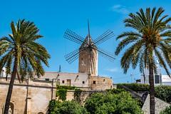 Mallorca - Palma - Windmühle mit Palmen - 1050 (Peter Goll thx for +12.000.000 views) Tags: spanien windmühle d850 himmel spain majorca palma palme mallorca island sky windmill nikkor 2019 insel nikon balearischeinseln