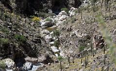Molino Canyon (zeesstof) Tags: zeesstof vacation arizona tucson desert mountlemmonhighway santacatalinamountains igneous granite precambrianintrusives tertiaryintrusives geology molinocanyon trailhead