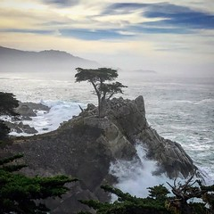 lone cypress (photographedbyac) Tags: monterey pacificocean tree lonecypress 17miledrive california usa unitedstates
