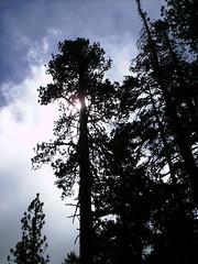 Img0528 (rugby#9) Tags: mountsanjacintostatepark clouds cloud outdoor usa palmsprings california us america sky trees tree
