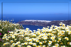 2047 Santorini (matthias.olt) Tags: flower santorini greece blue bluesky matthiasolt oia spring