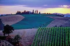 Estate marchigiana (luglio1981) (giorgiorodano46) Tags: luglio1981 july 1981 marche giorgiorodano analogic italy countryside agriculture