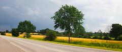 Landschaft mit Bundesstraße | 19. Juni 2019 | Schleswig-Holstein - Deutschland