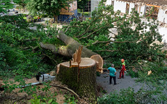 Timber! (macplatti) Tags: xt2 xf1655mmf28rlmwr gemeinde fotoprojekt baum eiche holzfaellen heimgartner erhard marco holzakkordant koblach vorarlberg austria wood tree lumberjack chainsaw workinginthewoods