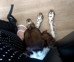 IMG_20190614_152442993 (EadaoinFlynn) Tags: germany niedersachsen braunschweig animal pet companion dog