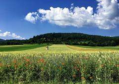- (klaus53) Tags: summer fields clouds sieding poppies loweraustria