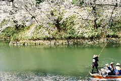 Rowing the sakura (しまむー) Tags: pentax mz3 fa 43mm f19 limited kodak gold 200 弘前城 桜祭り