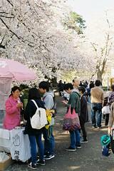 Fortune telling (しまむー) Tags: pentax mz3 fa 43mm f19 limited kodak gold 200 弘前城 桜祭り