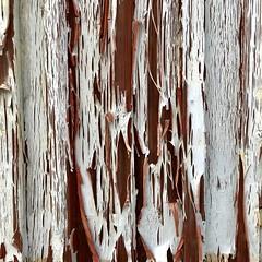 Sillingsfors Facade (David Abresparr) Tags: färg peeling flagnar sillingsfors paint vit white
