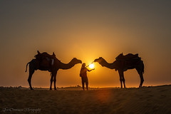 Enchanted with camels, Jaisalmer, Rajasthan, India (Catherine Gidzinska and Simon Gidzinski) Tags: 2018 camelridejaisalmer india jaisalmer november rajasthan gidzinska gidzinski grainconnoisseur saturday sun sunset desert camel centralcomposition woman adventure adventurer sanddunes sand dunes