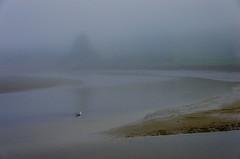 The Gull in the Fog (Bud in Wells, Maine) Tags: drakesisland maine webhannetriver wells estuary evening fog gull