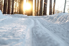 Ski track in the winter forest (stanislav.petelin) Tags: sunset природа sun winter forest ski track nature лыжня лес зима снег russia