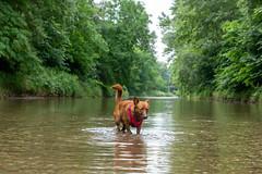 Milly 06-2019 (3) (Armin Rodler) Tags: dog hund milly animal pet nature austria österreich leitha