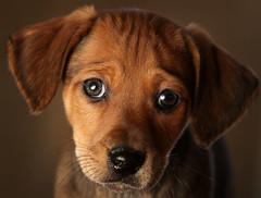 Puppies and dogs (urloved4eva) Tags: animal humaninterest bestof dog pet topics topix toppics toppix warrington england unitedkingdom