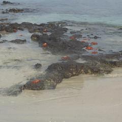 Galapagos Islands Feb 2019 (MisterQque) Tags: galapagos galapagosislands ecuador southamerica latinamerica