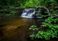 Solstice At Caron Falls 2 - Caron Park (j-rye) Tags: sonyalpha sonya7rm2 ilce7rm2 mirrorless waterfall stream creek water trees leaves green longexposure rokinon summersolstice rock lush lkg43 landscape nature