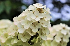 CX3A1728 (DaveH1970) Tags: plants summer june 21st 2019 missouri